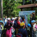 Leśna edukacja