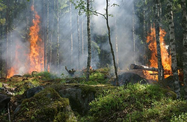 Pożar lasu. Obraz Ylvers z Pixabay
